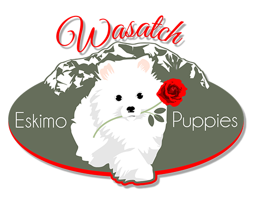 Wasatch Eskimo Puppies